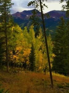Breck Wedding Meadow